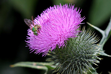 Canadian Thistle or Klingon Death Plant: A Gardener's Approach to Managing Workplace Conflict by Rae Stonehouse, Okanagan-based Author, Speaker, Speech/Presentations Coach, Power Networker & Toastmaster Extraordinaire.